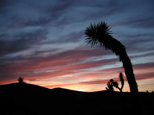 Desert at Sunset, Northeast Mexico, photo by Dave